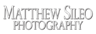 Matthew Sileo Photography | Birds, Wildlife, Ecology, Conservation | Matthew Sileo Photography