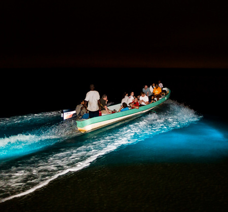 A tour boat enters the bioluminescent lagoon for the first time