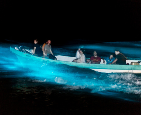 The tour boat drives through the lagoon- the faster the boat goes, the bigger the wake and brighter the luminescence!