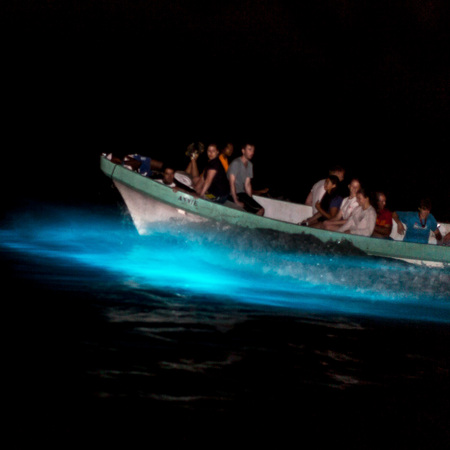 One more shot of the boat going through the bioluminescent lagoon!